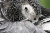 Un perroquet passe commande sur Amazon