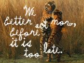 Kenzo s'associe à WWF pour la préservation des tigres sauvages