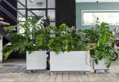 «Plant branding» : la revanche des plantes de mémé