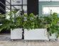 Plant branding : la revanche des plantes de mémé